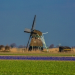 Blumenfeld_Holland2