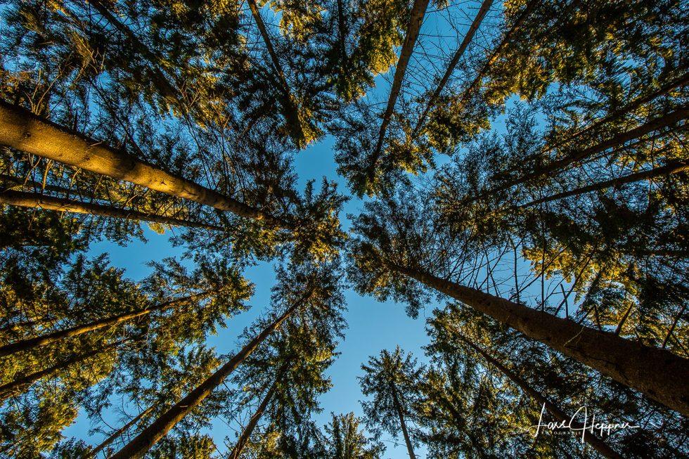 Fototour Nationalpark Eifel