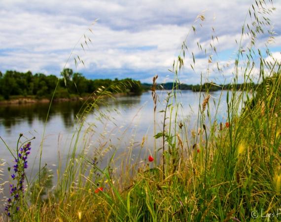 Loire-Landschaft in Bréhémont
