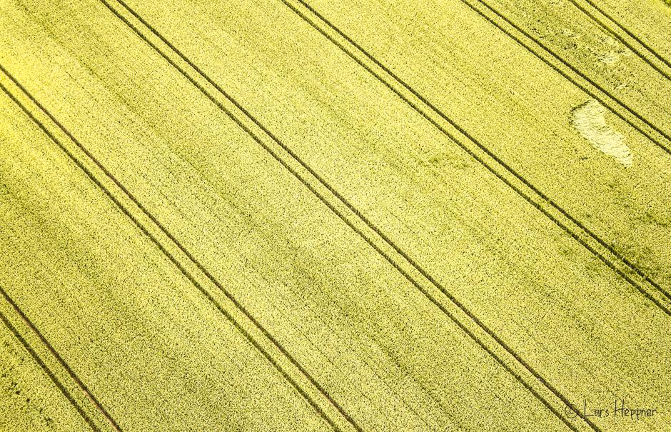 Luftaufnahme Rapsfeld