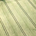 Getreidefeld von oben