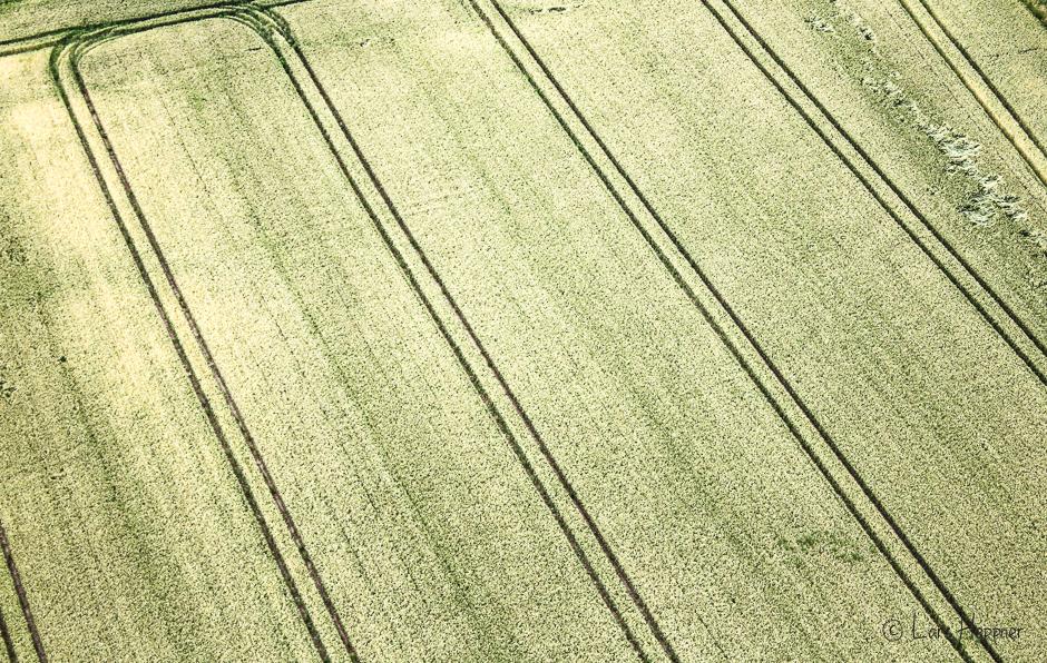 Luftaufnahme Getreidefeld