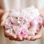 Kirschbaumblüten in der Hand