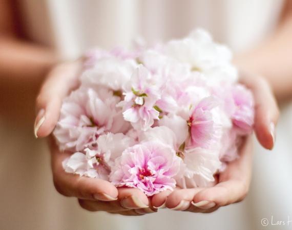 Kirschblüten in der Hand
