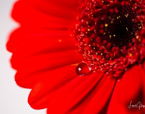 Makrofotografie Blume Wassertropfen