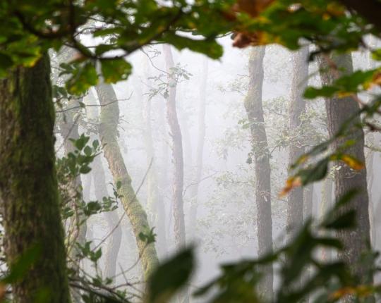 Nebel fotografieren – 5 Tipps für spannende und mystische Nebel-Landschaften