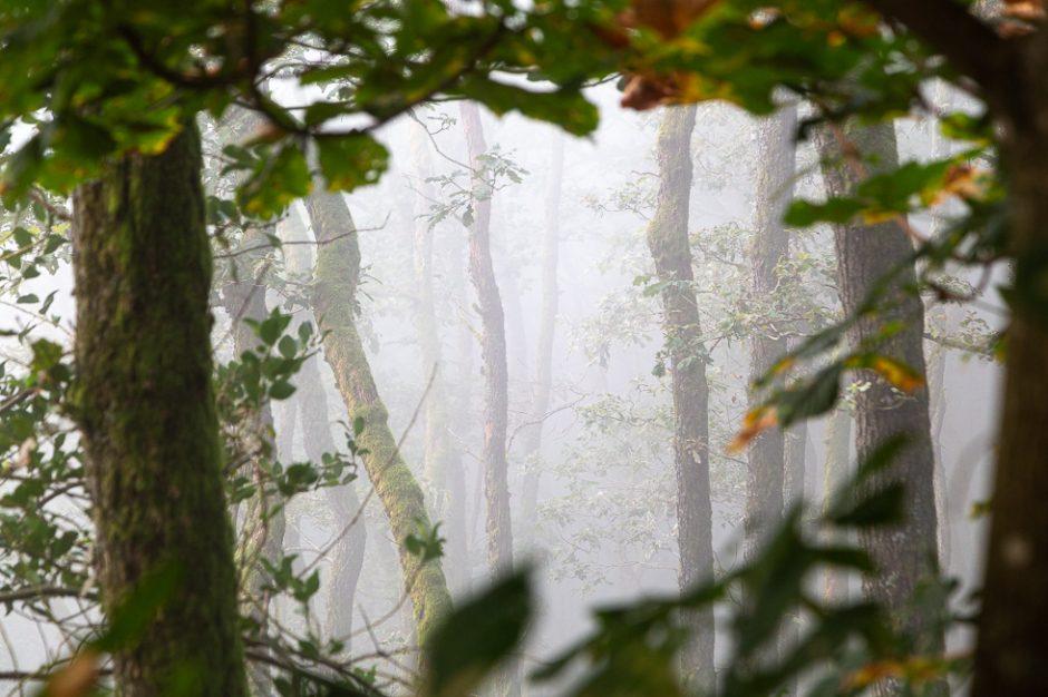Nebel fotografieren im Wald2