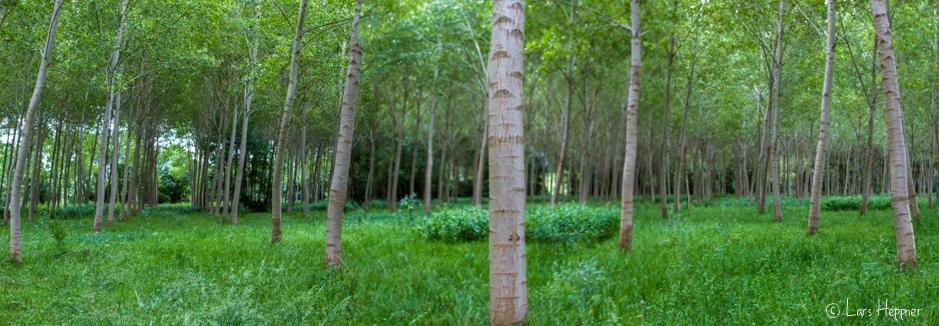 Waldlandschaft im Loire-Tal