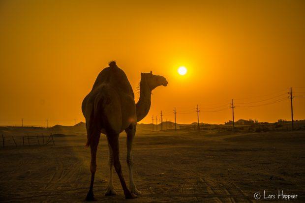 Sonnenuntergang in der Wüste von Abu Dhabi