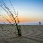Wüstensand in Ab Dhabi